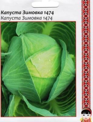 Капуста Зимовка: характеристика и описание гибридного сорта с фото