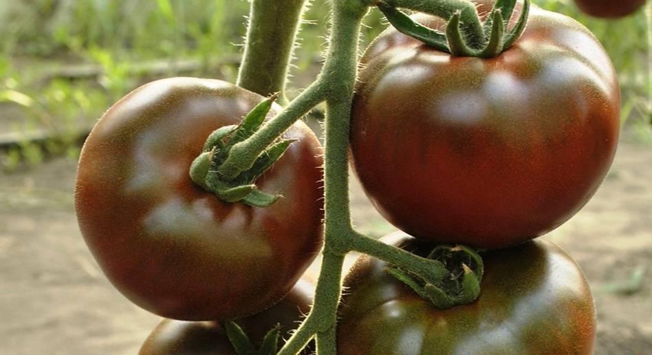 после они помидоры сорт интересной формы название и фото станет прекрасным
